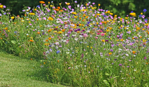 Blumenwiese zum 50. jährigen Jubiläum /// Golfverband NRW & GCRS